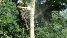 treescape tree surgery rope work in cornwall