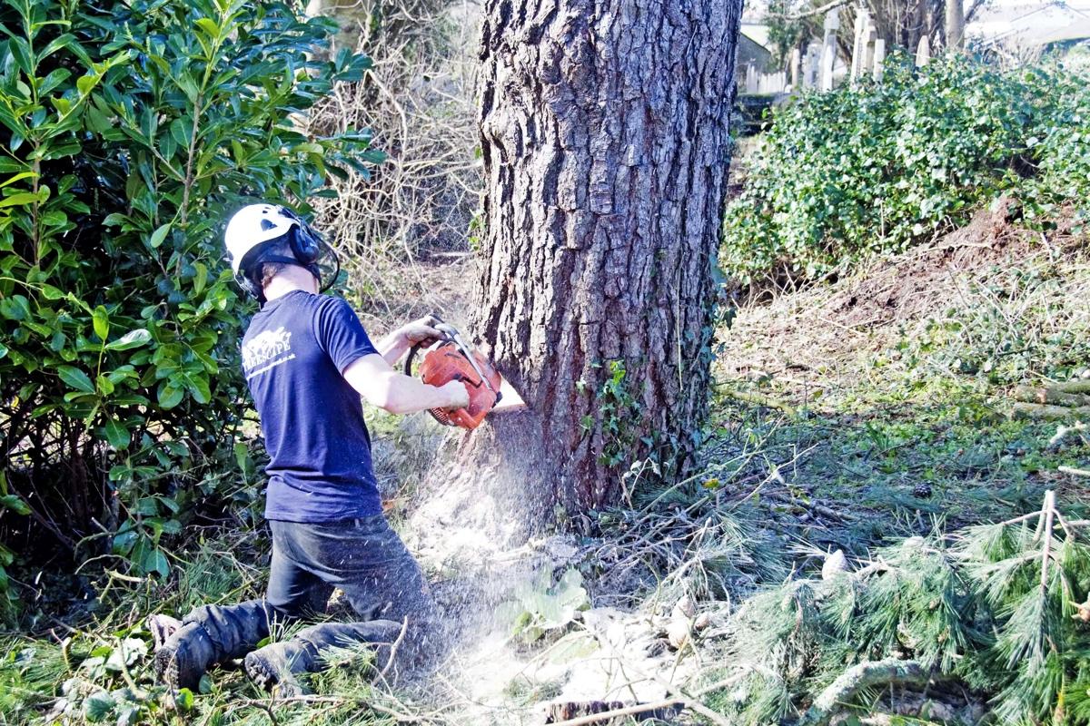 treescape-tree-surgery-cornwall-2